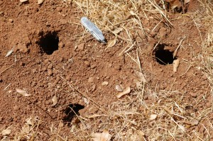 Who is Making all these Holes in the Ground? « Dale Pendell