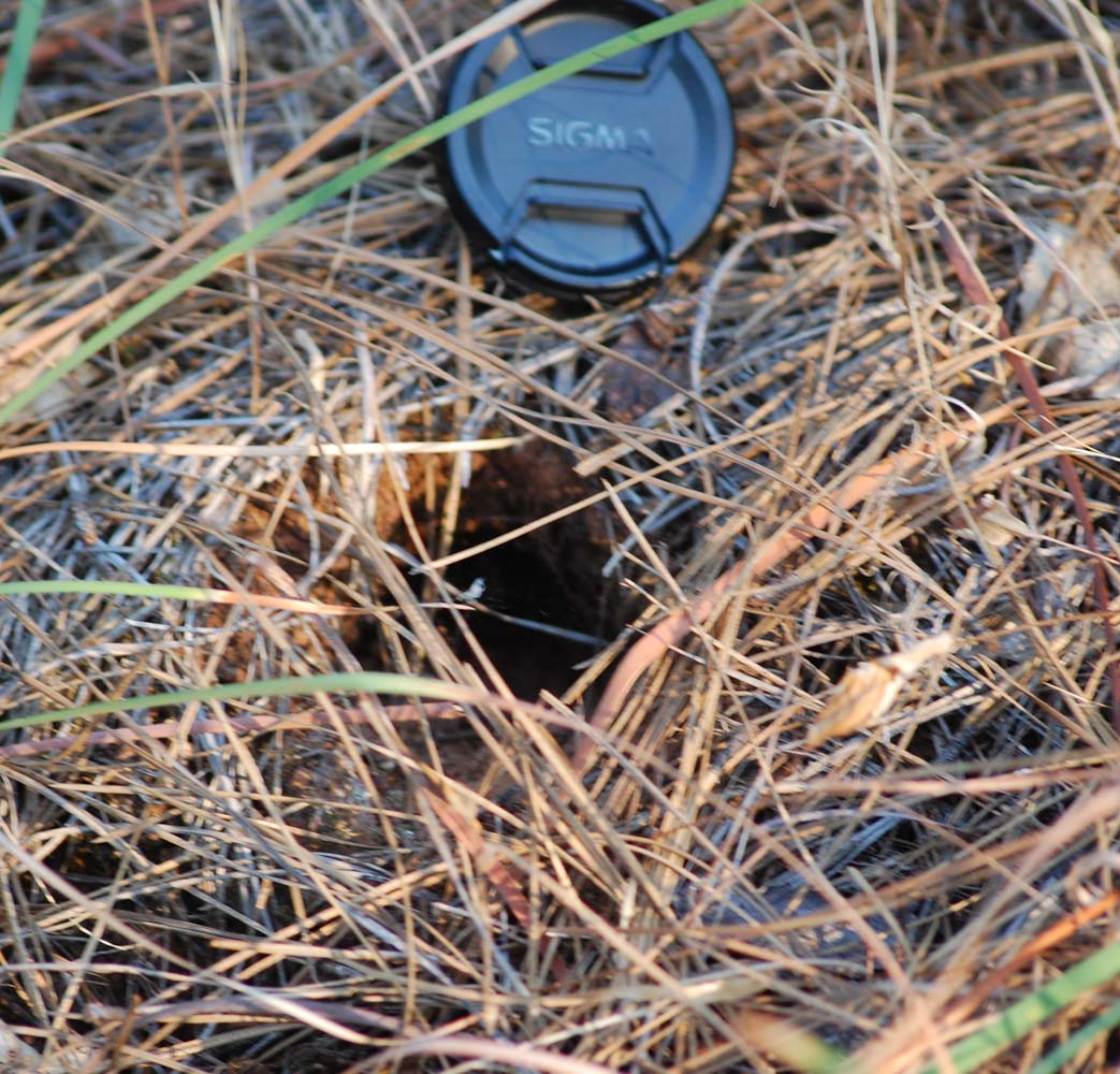 Gopher In Backyard: How To Get Rid Of A Gopher In My Backyard. How To Get Rid